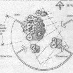 arquitectura Bioclimática, Temperatura y Vegetación (3)