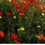La astenia Primaveral, nutrición ortomolecular