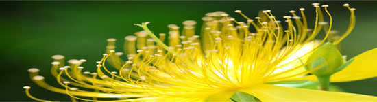 flor bedoce